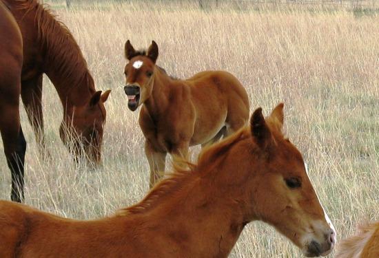 baby horse teeth